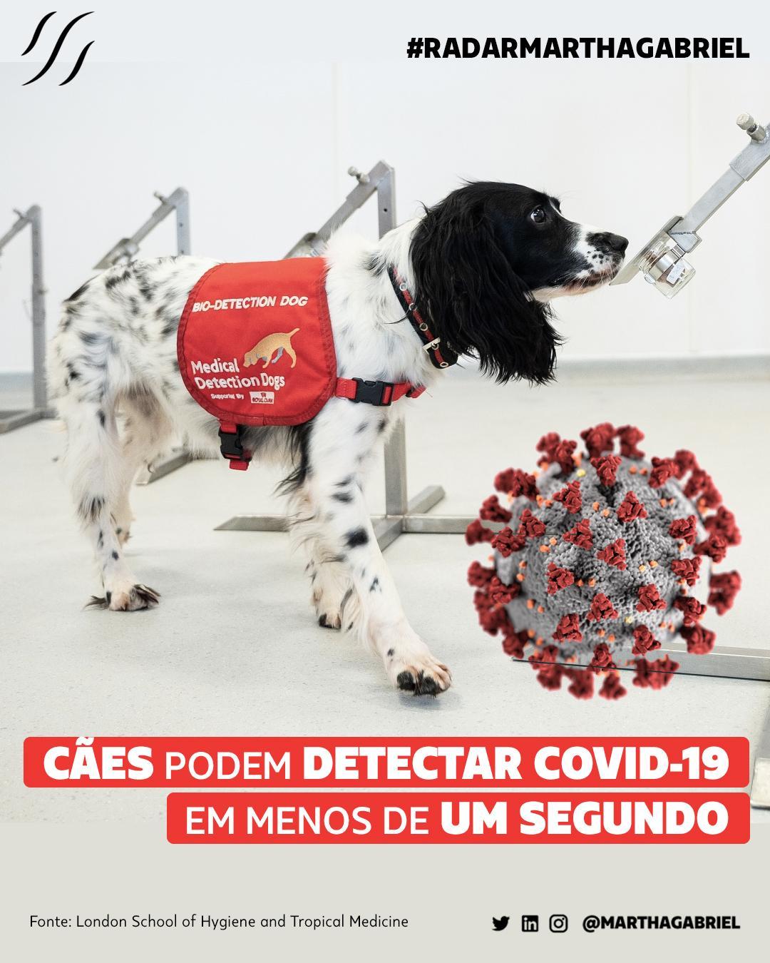 Cães podem detectar Covid-19 em menos de um segundo