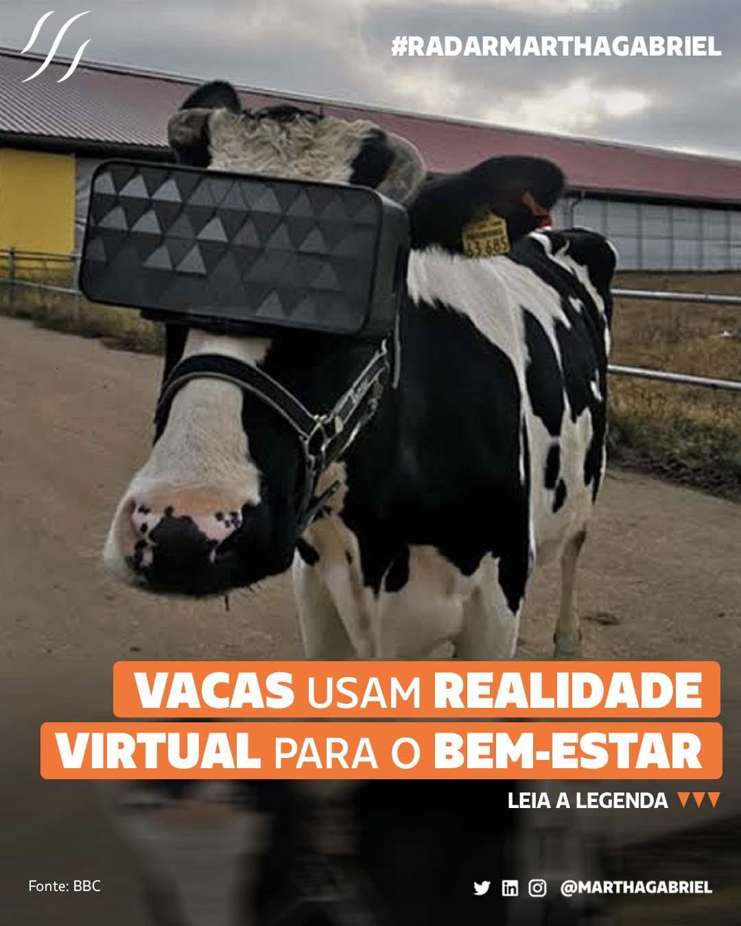 Vacas usam realidade virtual para o bem-estar