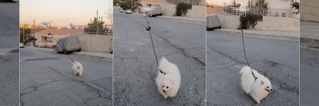 Drone passeia com cachorro durante quarentena por coronavírus