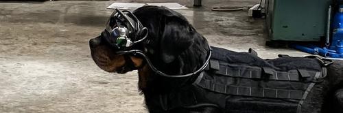 Exército dos EUA está testando dispositivo de Realidade Aumentada em cães